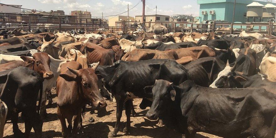 Hindistan istedi, Keşmir'de Kurban Bayramı'nda 'inek, buzağı' kesilmesi yasaklandı