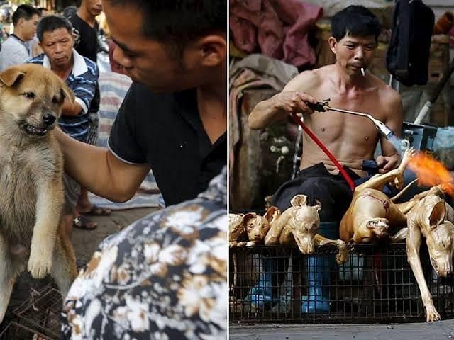 Çin'de fare, kedi, köpek yeme  yasağı