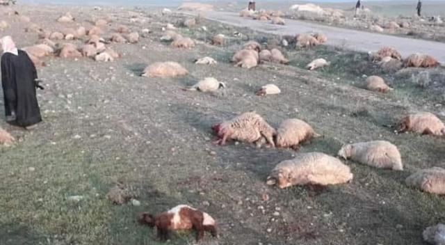 Hama'da Rejim askerleri ve Şii milislerden koyun katliamı