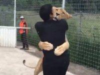 Bakıcısı ile 7 yıl sonra buluşan aslandan ibretlik davranış (Video Haber)