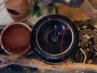 Senet mafyasından piton yılanlı haraç taktiği