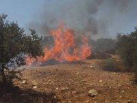 Siyonist yerleşimciler büyük yaşlı 50 zeytin ağacını ateşe verdi